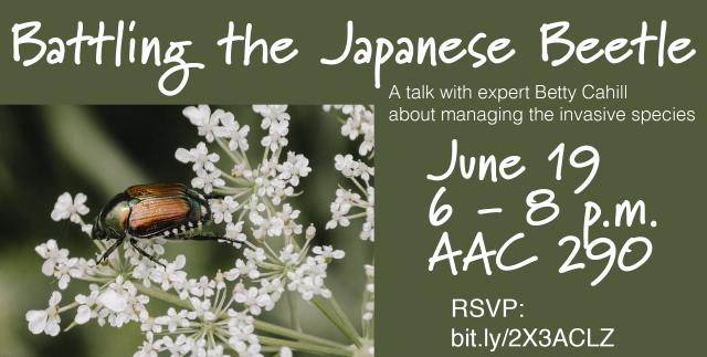 A Japanese beetle sits on white flowers. Text says Battling the Japanese Beetle. A talk with expert Betty Cahill about managing the invasive species. June 19, 6-8 p.m. AAC 290. RSVP with a bit.ly link.